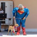 CedarBridge Academy Pet Pageant Bermuda, April 22 2018-6930
