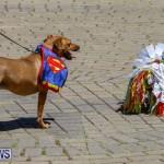 CedarBridge Academy Pet Pageant Bermuda, April 22 2018-6951