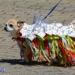 CedarBridge Academy Pet Pageant Bermuda, April 22 2018-6953