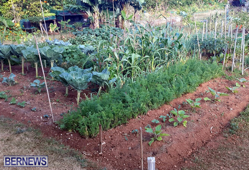 Paget-Community-Gardens-Bermuda-May-2017-2 2