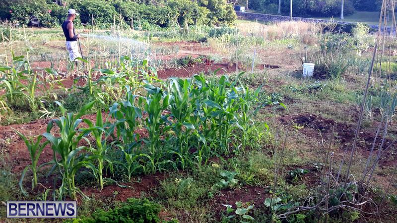 Paget-Community-Gardens-Bermuda-May-2017-4 2