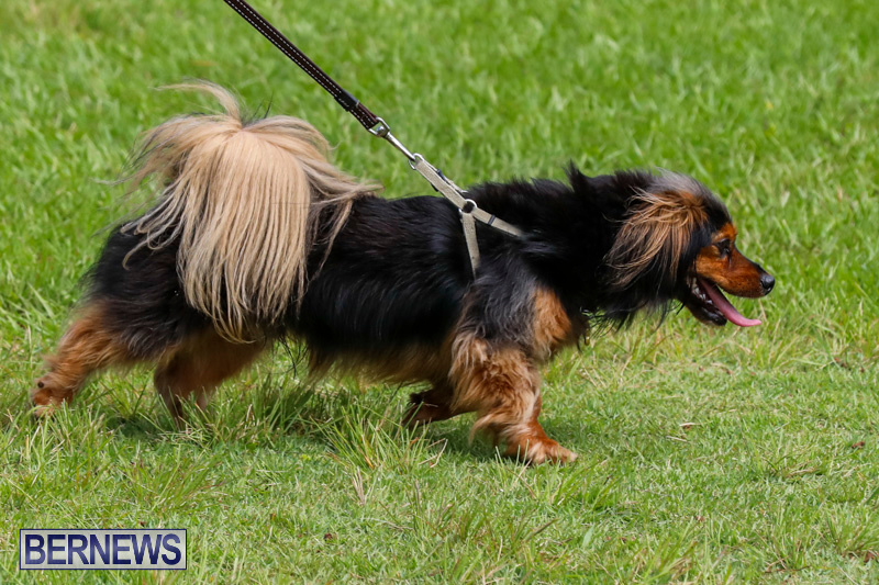Paws-To-The-Park-at-the-Arboretum-Bermuda-May-12-2018-3238
