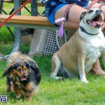 Paws To The Park at the Arboretum Bermuda, May 12 2018-3241