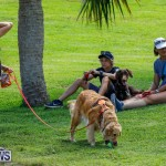 Paws To The Park at the Arboretum Bermuda, May 12 2018-3256