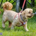 Paws To The Park at the Arboretum Bermuda, May 12 2018-3261
