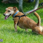 Paws To The Park at the Arboretum Bermuda, May 12 2018-3262