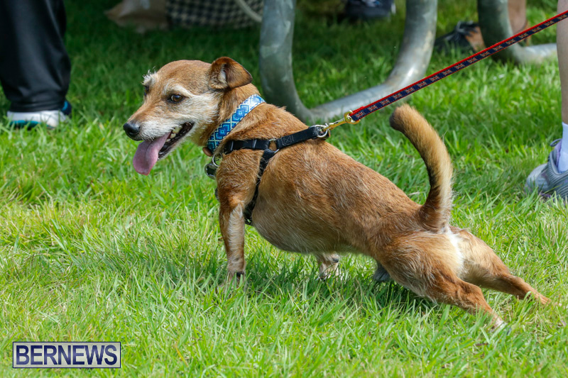 Paws-To-The-Park-at-the-Arboretum-Bermuda-May-12-2018-3262
