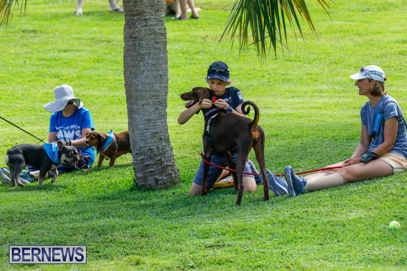 Paws-To-The-Park-at-the-Arboretum-Bermuda-May-12-2018-3274