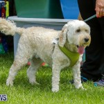 Paws To The Park at the Arboretum Bermuda, May 12 2018-3277