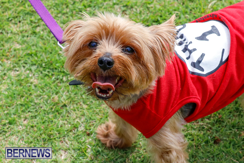 Paws-To-The-Park-at-the-Arboretum-Bermuda-May-12-2018-3280