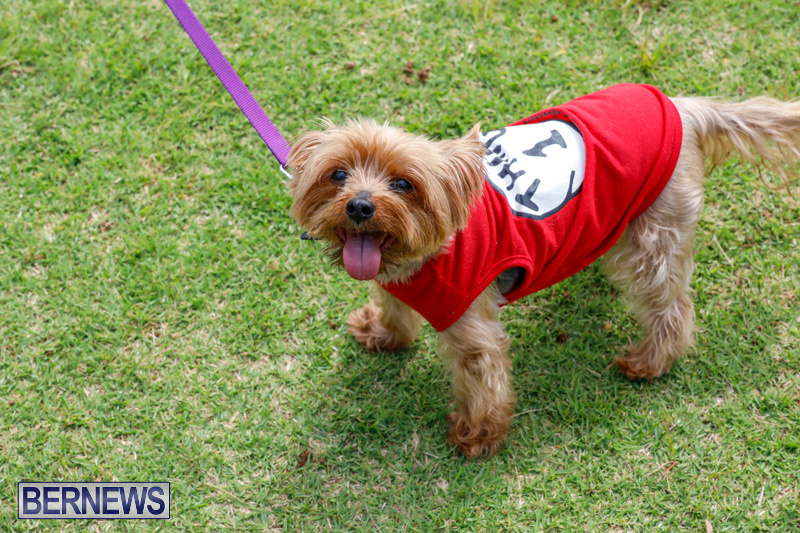 Paws-To-The-Park-at-the-Arboretum-Bermuda-May-12-2018-3281