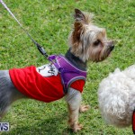 Paws To The Park at the Arboretum Bermuda, May 12 2018-3282