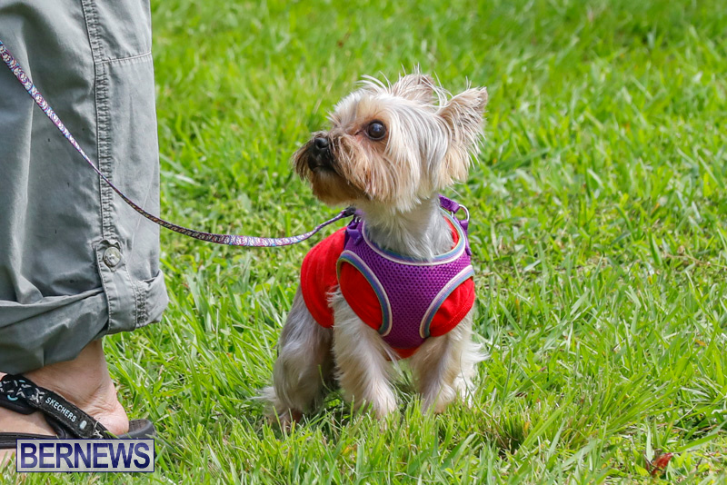 Paws-To-The-Park-at-the-Arboretum-Bermuda-May-12-2018-3292