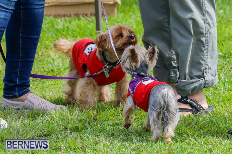 Paws-To-The-Park-at-the-Arboretum-Bermuda-May-12-2018-3296