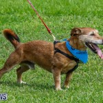 Paws To The Park at the Arboretum Bermuda, May 12 2018-3304