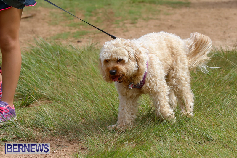 Paws-To-The-Park-at-the-Arboretum-Bermuda-May-12-2018-3351