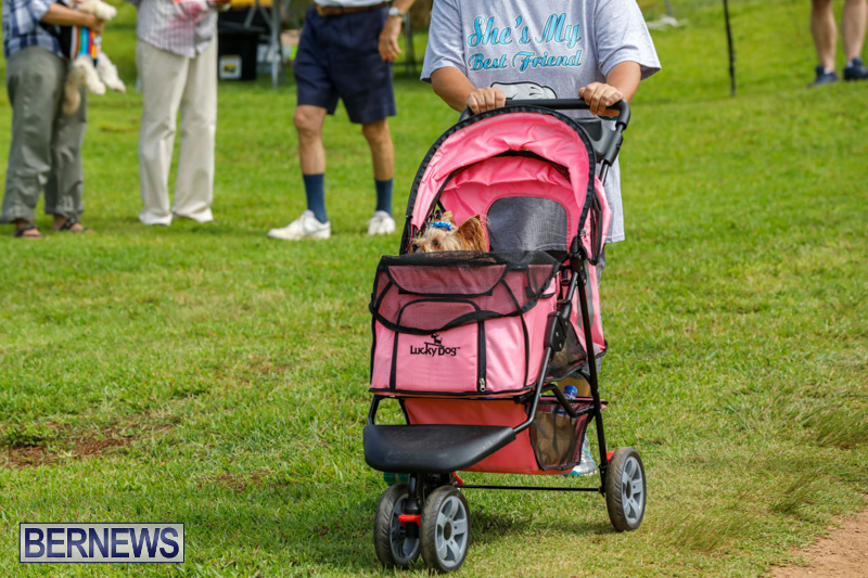 Paws-To-The-Park-at-the-Arboretum-Bermuda-May-12-2018-3358