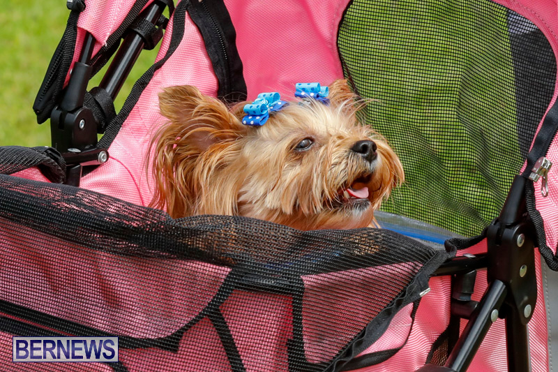 Paws-To-The-Park-at-the-Arboretum-Bermuda-May-12-2018-3367