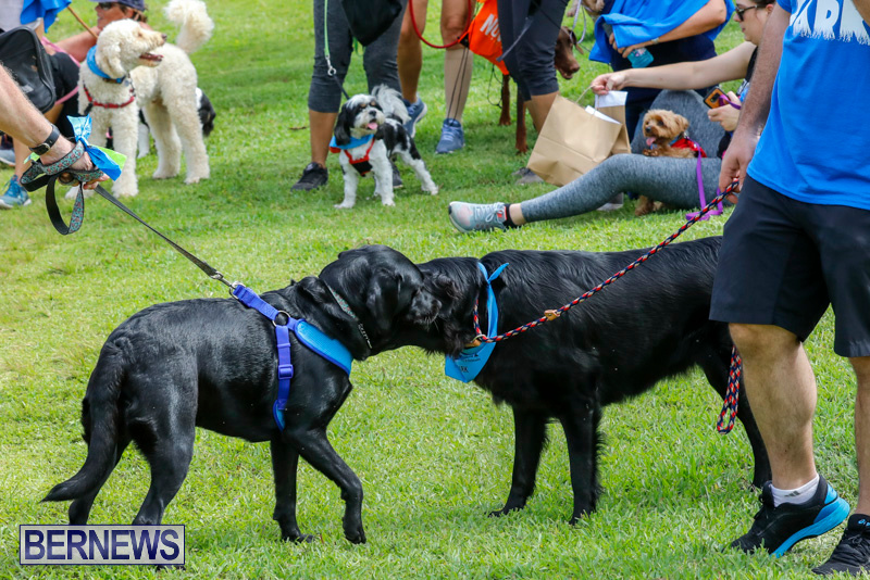 Paws-To-The-Park-at-the-Arboretum-Bermuda-May-12-2018-3377