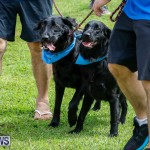 Paws To The Park at the Arboretum Bermuda, May 12 2018-3385