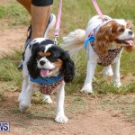 Paws To The Park at the Arboretum Bermuda, May 12 2018-3388