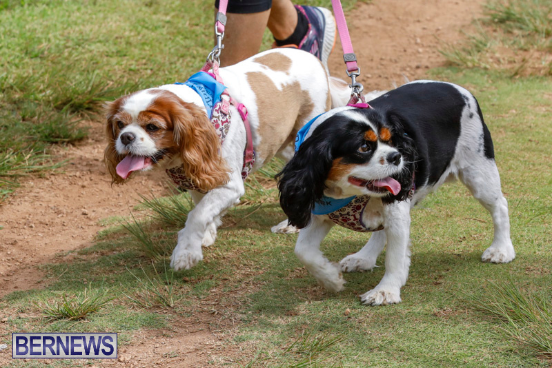 Paws-To-The-Park-at-the-Arboretum-Bermuda-May-12-2018-3392