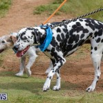 Paws To The Park at the Arboretum Bermuda, May 12 2018-3395
