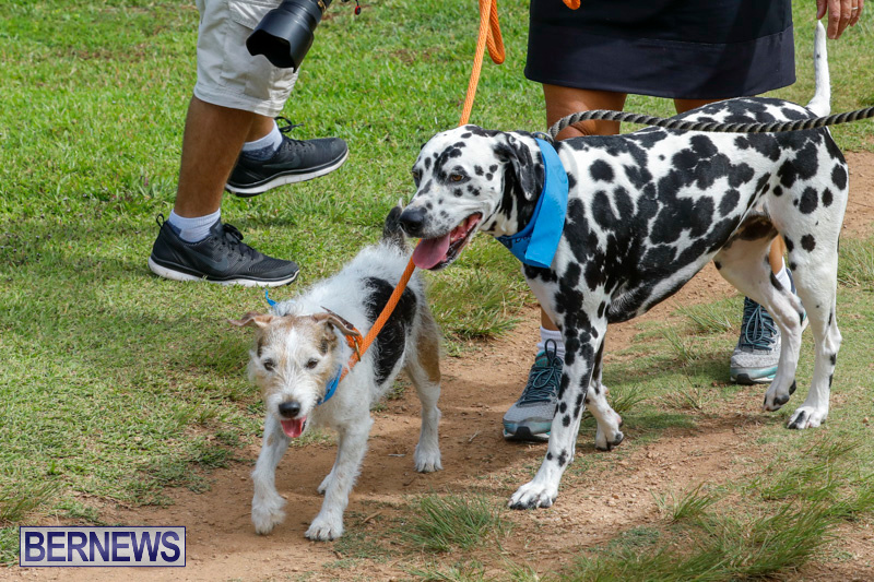Paws-To-The-Park-at-the-Arboretum-Bermuda-May-12-2018-3399