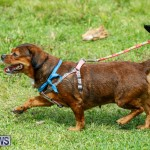 Paws To The Park at the Arboretum Bermuda, May 12 2018-3404