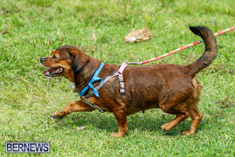 Paws-To-The-Park-at-the-Arboretum-Bermuda-May-12-2018-3404
