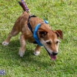 Paws To The Park at the Arboretum Bermuda, May 12 2018-3408