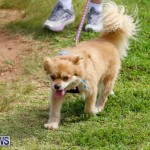 Paws To The Park at the Arboretum Bermuda, May 12 2018-3419