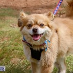 Paws To The Park at the Arboretum Bermuda, May 12 2018-3420