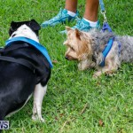 Paws To The Park at the Arboretum Bermuda, May 12 2018-3440