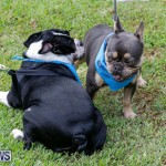 Paws To The Park at the Arboretum Bermuda, May 12 2018-3442