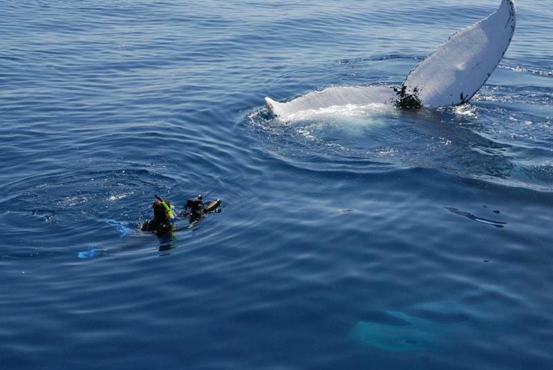 Whale Bermuda May 2018 (1)