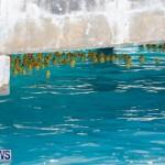 Rubber Duck Derby Bermuda, June 3 2018-2-436
