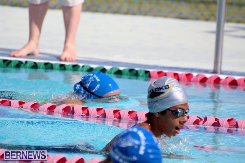 Swimming-Bermuda-June-13-2018-19