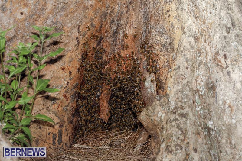 Bee hive Bermuda September 2018 (1)