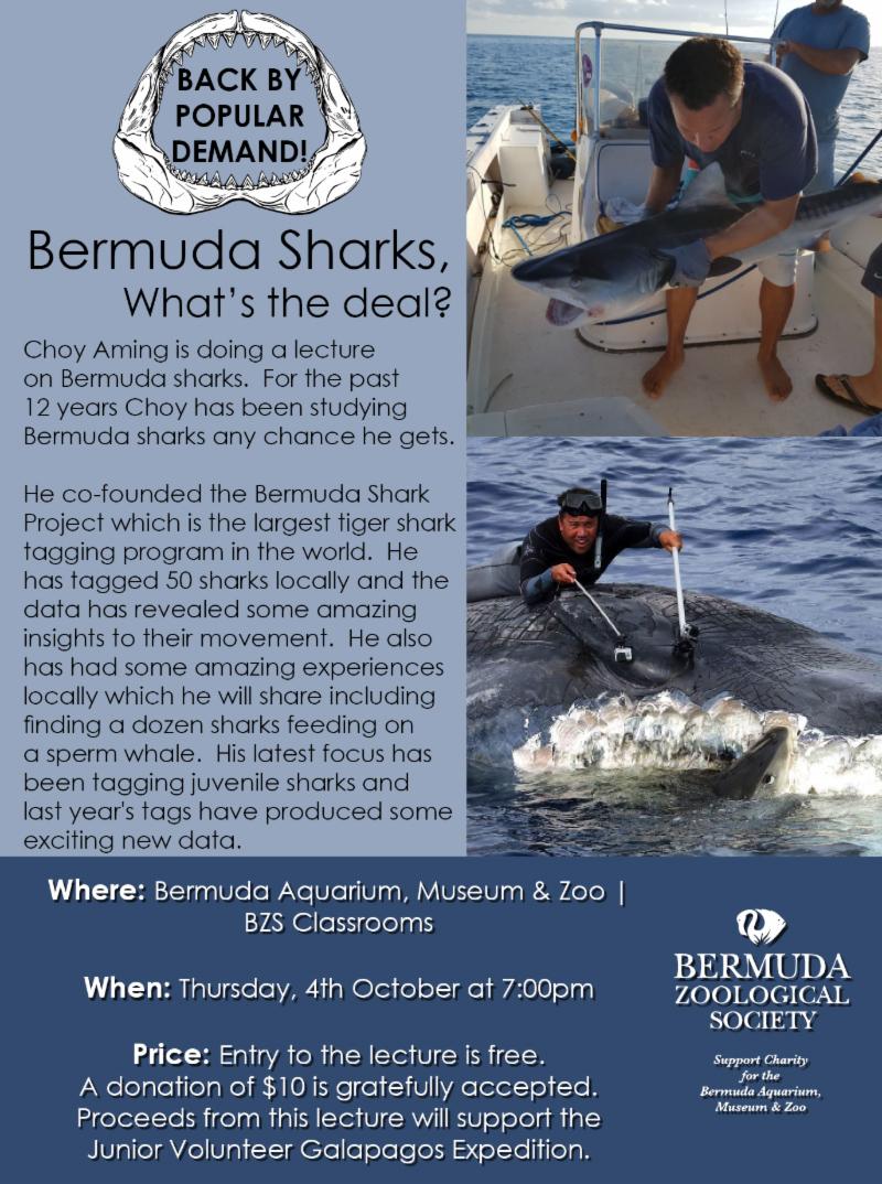 Bermuda Sharks September 2018