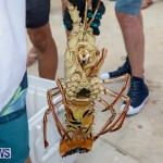Lobster Tournament Makin Waves Goslings Bermuda, September 2 2018-3827