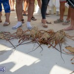 Lobster Tournament Makin Waves Goslings Bermuda, September 2 2018-3837