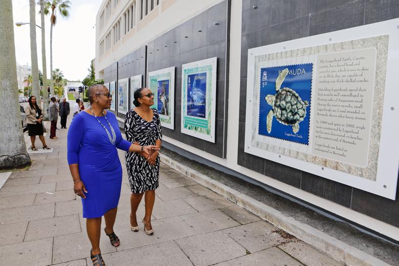 Bermuda Turtle Project October 2018 (1)