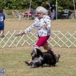 Devil's Isle All Breed Club's Bermuda International Championship Dog Show, October 20 2018-8082