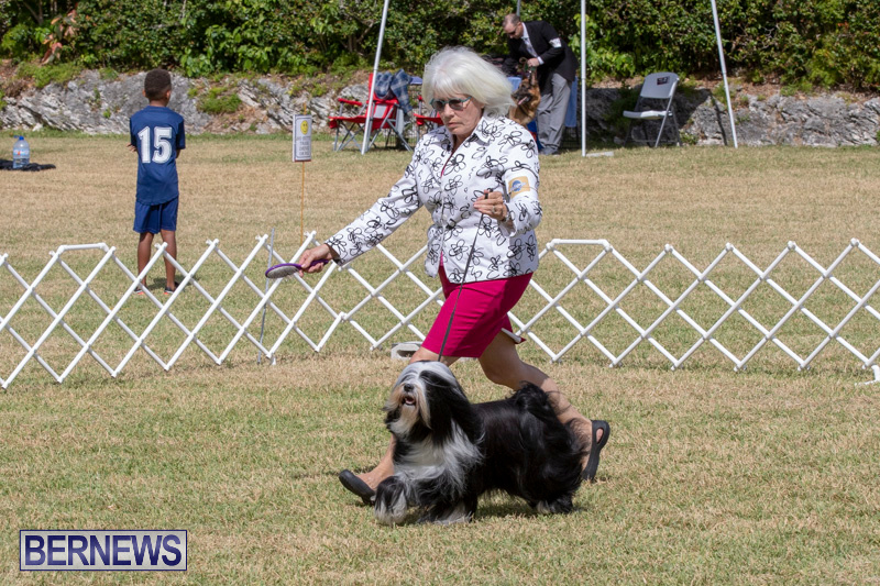 Devils-Isle-All-Breed-Clubs-Bermuda-International-Championship-Dog-Show-October-20-2018-8082