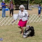 Devil's Isle All Breed Club's Bermuda International Championship Dog Show, October 20 2018-8083