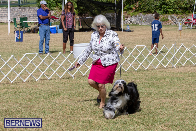 Devils-Isle-All-Breed-Clubs-Bermuda-International-Championship-Dog-Show-October-20-2018-8083