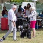 Devil's Isle All Breed Club's Bermuda International Championship Dog Show, October 20 2018-8086