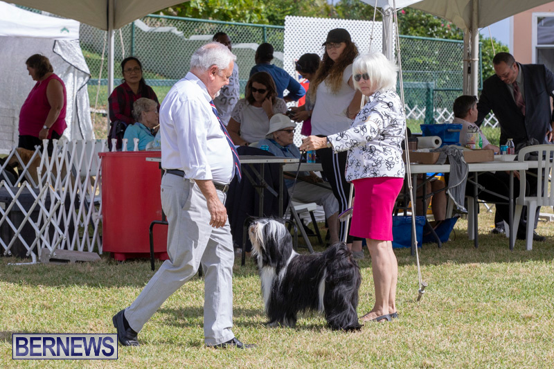 Devils-Isle-All-Breed-Clubs-Bermuda-International-Championship-Dog-Show-October-20-2018-8086