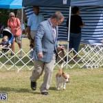 Devil's Isle All Breed Club's Bermuda International Championship Dog Show, October 20 2018-8087